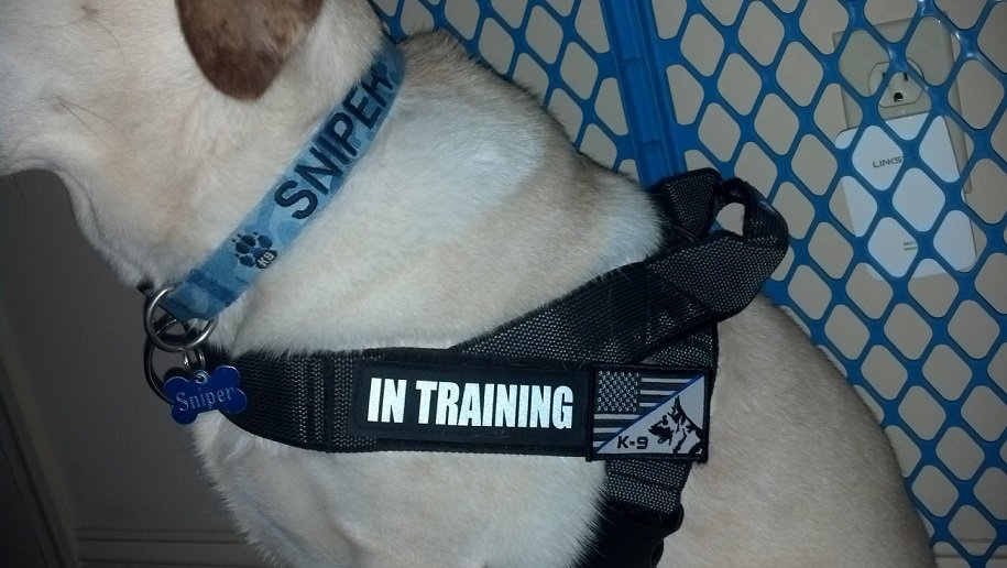 Collar Harness2.jpg