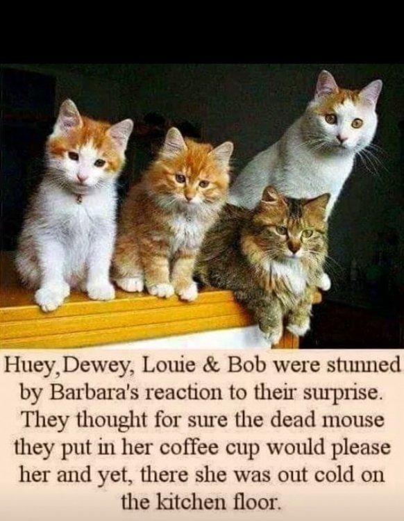 1917008219_CatsandaMouse.jpg.3dabed210b27e052c72f818c78a59441.jpg